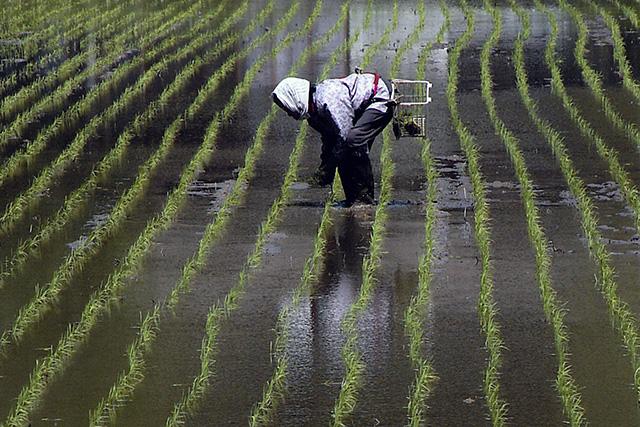 新潟県三条市下田郷轍WADACHI米コシヒカリSpecially Cultivated Rice