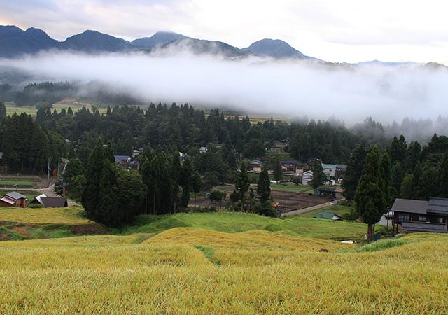 轍米 轍ファクトリーセレクトSpecially Cultivated Rice